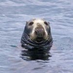 Wildlife Seals Skye