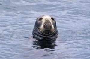 Wildlife Seals Skye